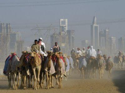dubai/camels